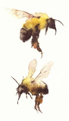 Bee watercolor painting *I don't have an artist to reference/recognize for this painting. Watercolor Animals, Watercolor And Ink, Watercolour Butterfly, Art Paintings, Watercolor Paintings, Watercolours, Stylo Art, Illustration Art, Illustrations
