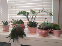 Pink pottery and plants