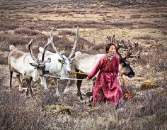 dukha Reindeer Herders, Turkish People, Food Places, People Around The World, Natural, Aboriginal People, Camels, Horse Girl, Central Asia