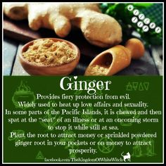 Sage uses ginger often Magic Herbs, Plant Magic, Herbal Magic, Healing Herbs, Natural Healing, Voodoo, Wicca Herbs, Witchcraft Herbs, Magick Spells