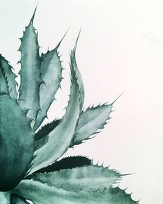Buy Agave by Katryn Bowe from United States, a limited edition art print series . - Buy Agave by Katryn Bowe from United States, a limited edition art print series printed on high qual - Plant Painting, Plant Art, Plant Illustration, Botanical Illustration, Watercolor Plants, Watercolor Paintings, Watercolor Walls, Cactus Drawing, Creation Art
