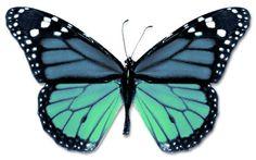 Looks like a blue monarch...I love butterflies.