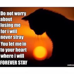 For those we love who are over the Rainbow Bridge Cat Quotes, Animal Quotes, Cat Sayings, Happy Quotes, Crazy Cat Lady, Crazy Cats, I Love Cats, Cute Cats, Pet Loss Grief