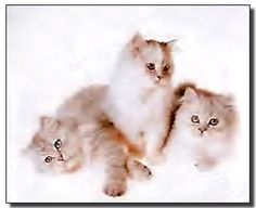 This funny cute cats art print poster is not only ideal for livening up any space but also for providing simple visual interest on wall surfaces. It would be a great addition for your kid's room and brings cozy, charming touch to your place. This cute cat art print poster will be a perfect gift for your sweet little angel. It would also make a great gift for cat lovers. Hurry up and grab this wonderful wall poster for its durable quality and high degree of color accuracy.