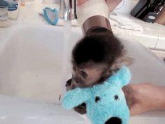 Washing Little Monkey