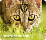 Kitties & slippery elm bark for kidney & digestive issues