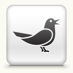 Square Button with Bird royalty free vector art vector art illustration