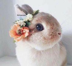 animal, beautiful, and bunny image - Kaninchen Baby Animals Super Cute, Cute Baby Bunnies, Cute Little Animals, Cute Funny Animals, Cute Dogs, Lop Bunnies, Bunny Bunny, Easter Bunny, Baby Animals Pictures