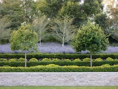 Terraced gardens above a gray stone retaining wall maintain a subdued color palette. by Andrea Cochran