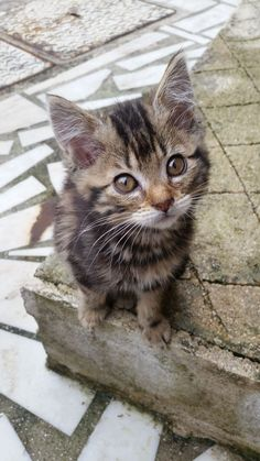 Hello Yuna :) - cute Kitten on Yummypets.com ... Join us on the first pet…