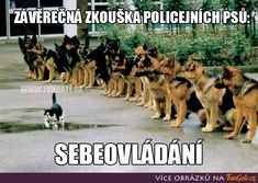 Funny pictures, jokes and funny memes sharing website to make others laugh. Get more funny pictures here. Login and share funny pic to make world laugh. Crazy Funny Memes, Really Funny Memes, Wtf Funny, Funny Dogs, Funny Quotes, Funny Shit, Hilarious, Police Test, Police Dogs