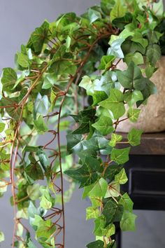 Search results for: 'plant stand' Fabulous Faux Trailing Ivy Posy<br> Fake Plants Decor, Ivy Plants, Faux Plants, Plant Decor, Indoor Plants, Rockett St George, Shops, Bar Interior, Display Homes