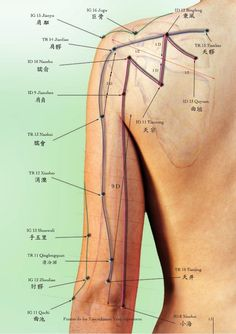 Acupressure More Effective Than Physical Therapy - Acupuncture Hut Acupuncture Benefits, Acupuncture Points, Massage Benefits, Acupressure Points, Medicine Book, Muscle Anatomy, Massage Techniques, Traditional Chinese Medicine, Glutes
