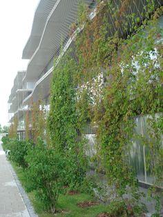 Residencia de estudiantes, Garching, Germany. Fink+Jocher Malla X-TEND como envolvente de fachada y soporte para plantas trepadoras.