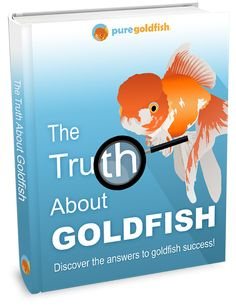 21 Incredible Types of Goldfish