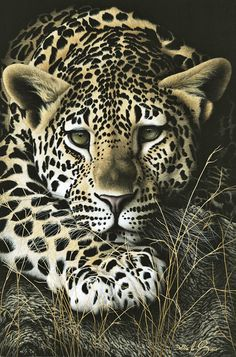 Animals Art Exhibition - 3rd Place  Overall Category  Debbie le Sueur  Pawsing Preditor - Debbie is a self-taught Artist from South Africa. She has a unique style that is accredited to her Grandmothers influence that helped her to express her love for Wildlife through her Artwork and her Parents