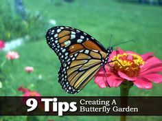 9 Tips On Creating A Butterfly Garden
