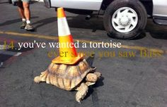 you've wanted a tortoise since you saw Bass. (Rizzoli & Isles Problems)