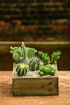 Cactus Box - Succulent Design - Fresh assortment of Cacti in a locally sourced wooden planter box. Delivered Daily in NYC The -