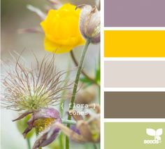 Seeds Design | Color Palette | Maybe the olive for trim purple for accents ...