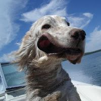 Happy dog. #boatsdotcom