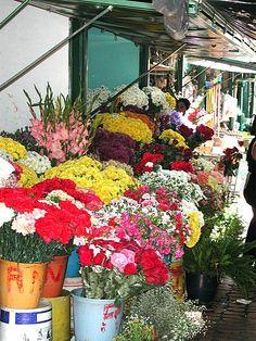 la flores.. San Cristobal, Venezuela.