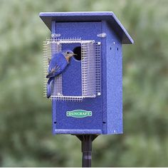 Bird-Safe® Bluebird House & Pole with Noel Guard, a barrier that protrudes inches from the entrance hole, ensures nestlings are protected from cats, raccoons, and squirrels. Bird House Plans, Bird House Kits, Bird House Feeder, Bird Feeder, Bird Aviary, Bird Boxes, Kinds Of Birds, Backyard Birds, Wild Birds