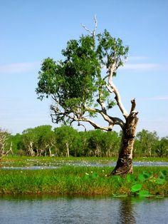 Wetlands in Darwin,Australia
