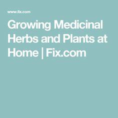 Growing Medicinal Herbs and Plants at Home   Fix.com