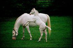 Las Mejores Fotografías del Mundo: Hermosos caballos de la fotógrafa Melissa Farlow