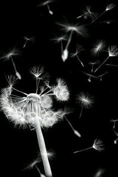 Flowers fondos blanco y negro ideas Black And White Aesthetic, White Style, Foto Art, Black And White Pictures, Black And White Background, Make A Wish, White Art, Belle Photo, Black And White Photography