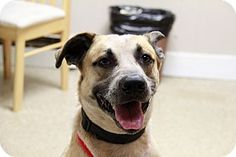 Brookhaven, NY - Australian Shepherd Mix. Meet Austin, a dog for adoption. http://www.adoptapet.com/pet/12145912-brookhaven-new-york-australian-shepherd-mix