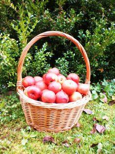 Domácí jablečný ocet :: .