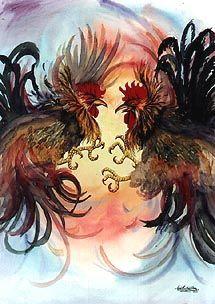 Peleas de gallo en colombia Crónica gallos de pelea
