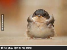 Baby Penguin is so cute..
