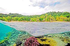 Qamea Reef