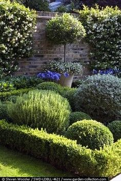 potted topiaries along brick wall