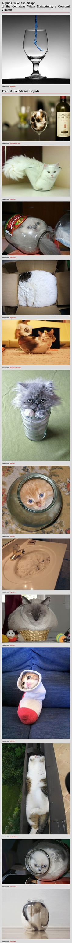 Here is why cats might actually be liquid, or shapeshifters. (I just kept laughing and laughing and laughing)