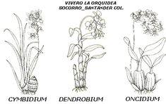Las Orquídeas - Monografias.com