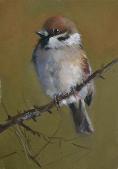 "Sparrow by Mike Beeman Pastel ~ 7"" x 5"""