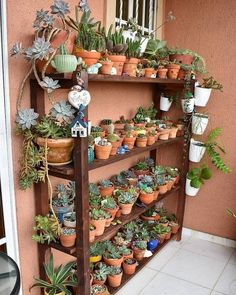 Wooden shelves like this one are great for displaying succulents! They give you space for so many plants and keep your collection looking… Succulent Gardening, Succulent Pots, Cacti And Succulents, Planting Succulents, Cactus Plants, Planting Flowers, Indoor Gardening, Balcony Plants, Garden Plants