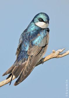 Brewster Rufous Bellied Blue Birds /& Birdhouses Wallpaper Border Made In USA