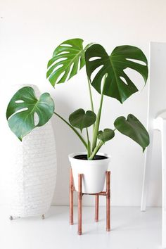 Raised Copper Pot Plant Stand DIY // Tutorial - Pure Sweet Joy - Raised Copper Pipe Pot Plant Is really a few points to assist you to properly increase your brand new plants. House Plants Decor, Plant Decor, Plant Art, Low Maintenance Indoor Plants, Decoration Plante, Home Decoration, Pot Plante, Diy Plant Stand, Indoor Plant Stands
