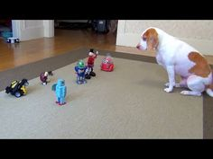Dog vs. Robot Army: Cute Dog Maymo - YouTube