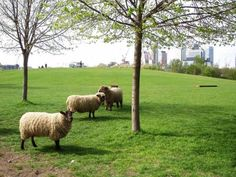 Top 5 Parks to Visit in London Springtime