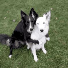 Dog Ramp Animals Giff #4521 - Funny Dog Giffs| Funny Giffs| Dog Giffs