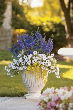 cute for the front of the house: 'Angel Face Blue' angelonia snuggles up to white petunias and creeping Jenny in a patio container.