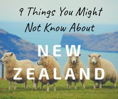 9 Things You May Not Know About New Zealand – Mom Off Grid You May, 30 Years, New Zealand, Grid, Mom, News, Pictures, Travel, Life