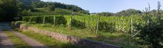 Brusnengo and its wineyards - #Biella, Italia