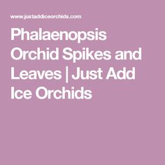 Phalaenopsis Orchid Spikes and Leaves | Just Add Ice Orchids
